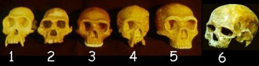 The significance of Peking Man